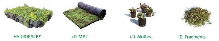 4techniques vegetalisation