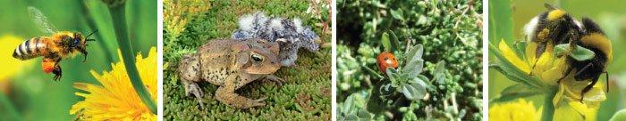 biodiversite-exemple-insecte2