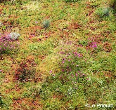 couvert-mix-flore-prairie
