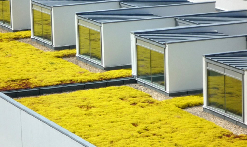 Green roofing produced with the HYDROPACK® tray