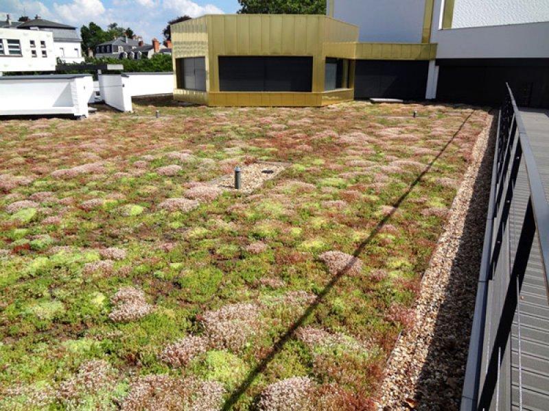 green roof the sedum mat