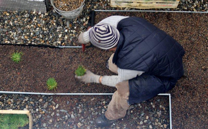 Plantation de mottes i.D. MOTTE sur une toiture