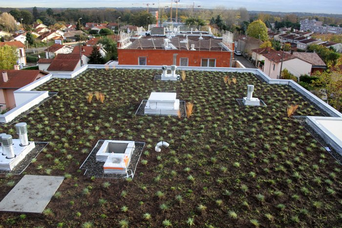 Green roof with plug plants (on installation)
