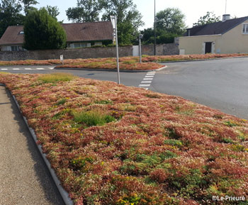 Description Of The Planting System With The I D Mat Sedum