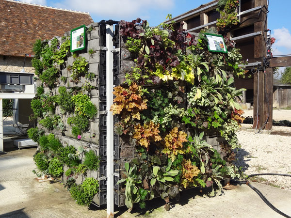 Researching new plants for living walls