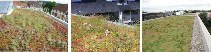 Concepts for green roofs vegetal i d - Toiture vegetalisee extensive ...