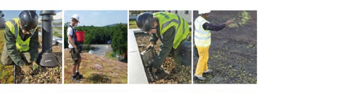Routine maintenance of green roofs