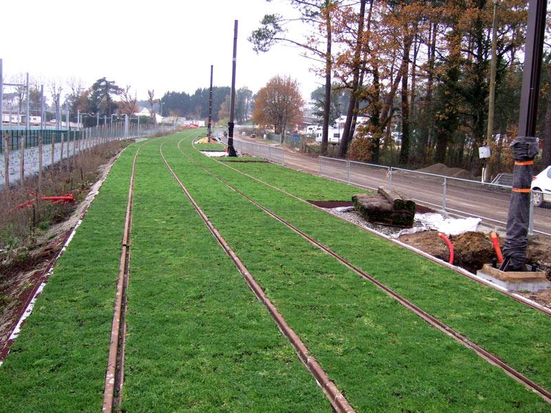 Green Lines Along The Tramway Tracks Vegetal I D