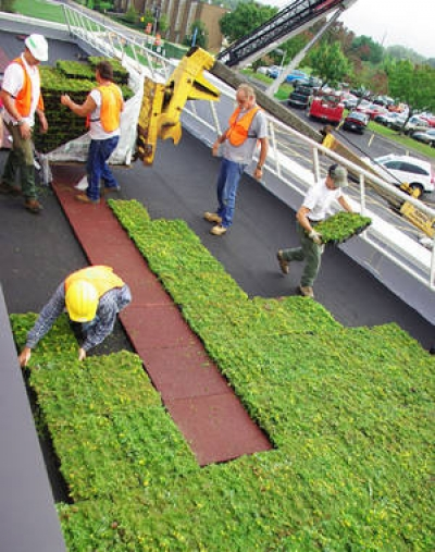 Installing and monitoring green roof with sedum cuttings