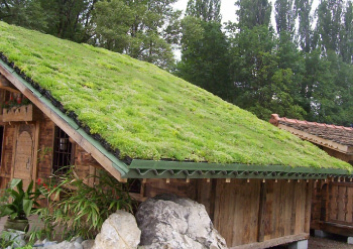 Steep pitch green roof on cottage