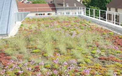Green roofs with planting plugs