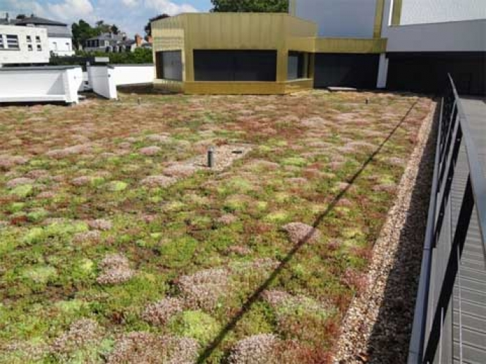 Green roof on a media library