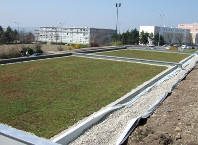 Green roofs with plants cuttings